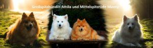 Großspitzhündin Amila und Mittelspitzrüde Monty